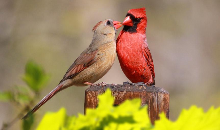 birds love agreements douglas weiss
