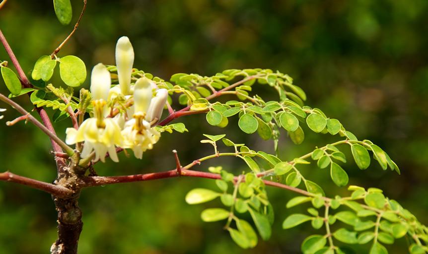 moringa, danielle lin, sherry erickson