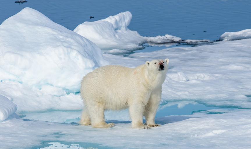 Earth Justice polar bear Tom Turner