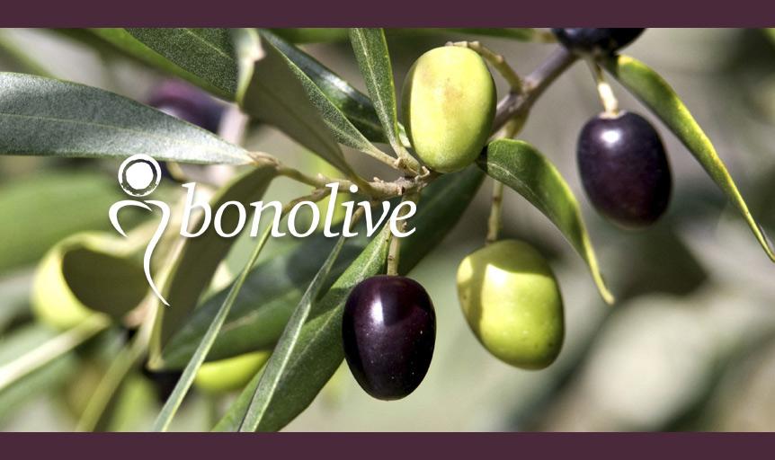 Bonolive olive