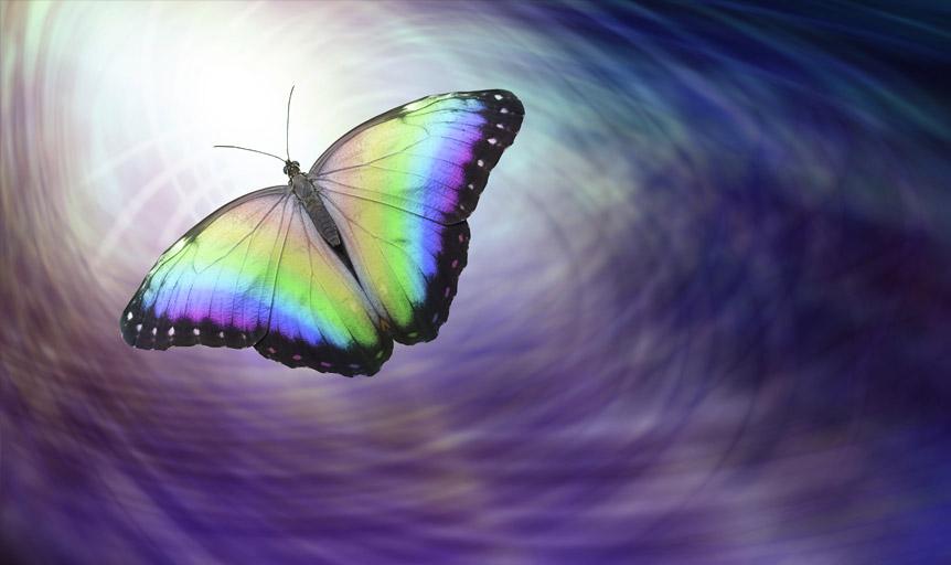 Lorenzo Marion Danielle Lin butterfly purple