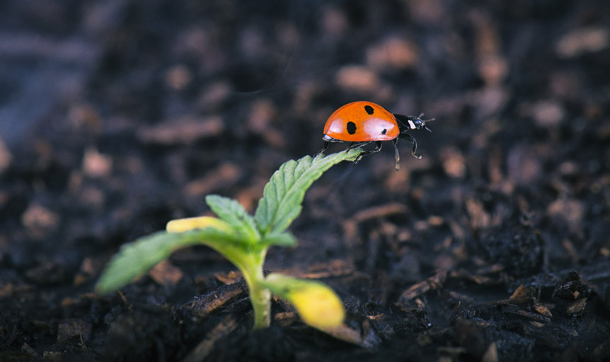 ladybug hemp Brie Malarkey Danielle Lin